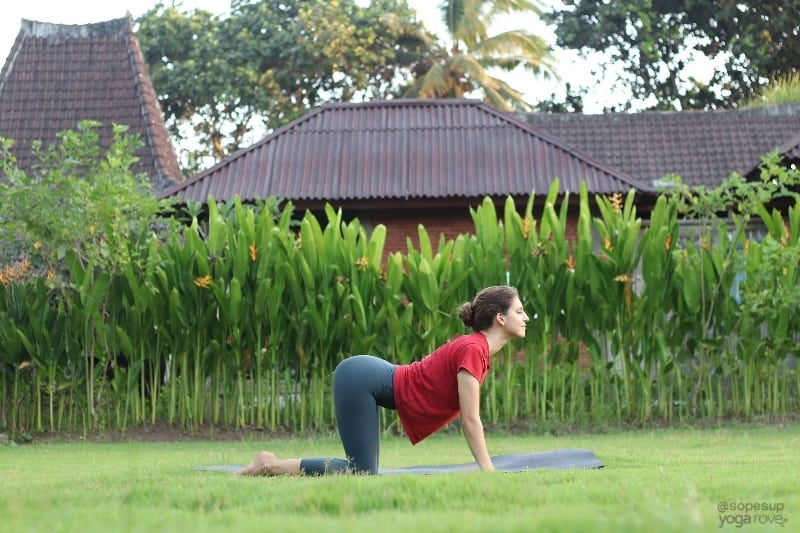 Yoga Poses for Beginners: Cow Pose