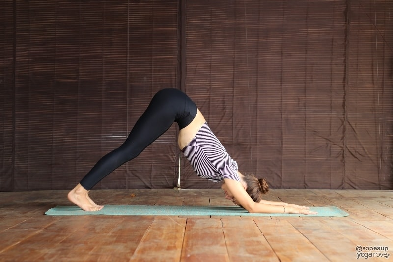 yogi practicing dolphin for chaturanga prep
